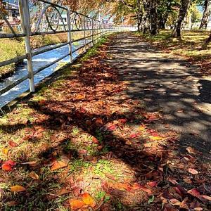 落ち葉を踏んで秋を楽しむ