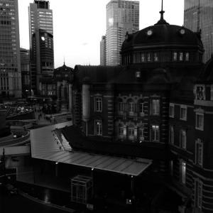 真夜中の都会の自然