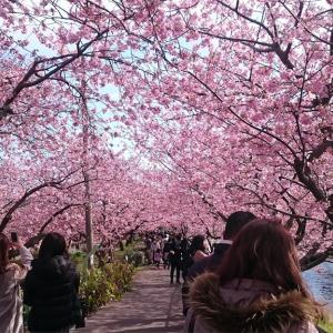 河津桜の記録