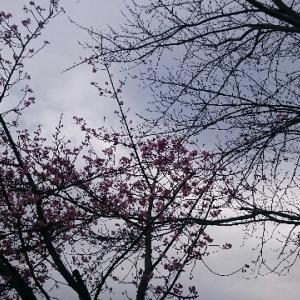 2月の寒空に春と冬