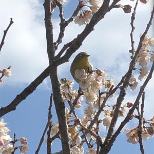 春だニャ〜♡