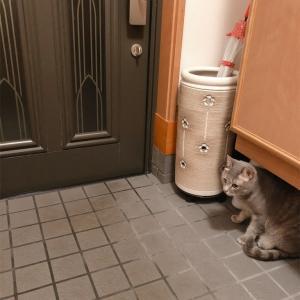 猫の粗相、消臭するには?
