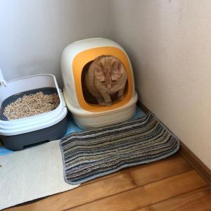 猫トイレのニオイ対策〜木質ペレットに変えてみた