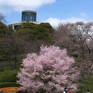 広島市植物公園  春がいっぱい