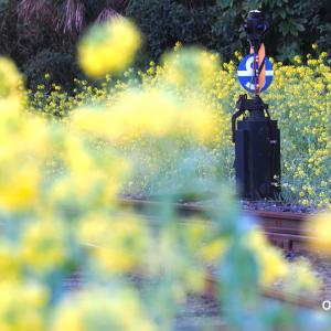 小湊鉄道里見駅、菜の花には埋もれてるけど・・・