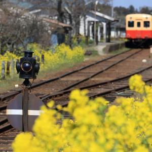 キハ200、小湊鉄道は菜の花街道