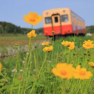 小湊キハ200、久しぶりに線路沿いの花と戯れる