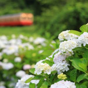 小湊キハ200、白い紫陽花、赤い紫陽花、色とりどりな沿線を行く
