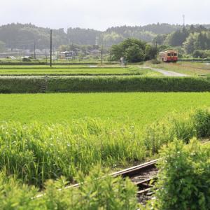 小湊キハ200、緑いっぱいの上総川間の6月のある日