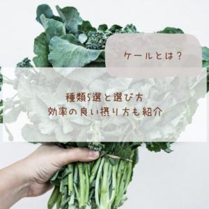 ケールとは?種類5選と選び方・効率の良い摂り方も紹介