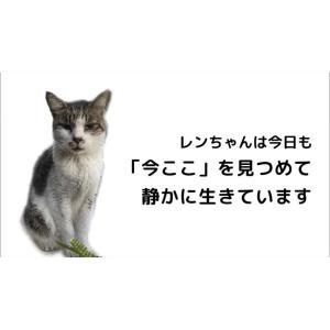 静かに「今ここ」を生きる、雄猫レンちゃんの動画です。