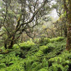 【ハワイ】3400エーカー以上のマウイ島の森林が公有地に
