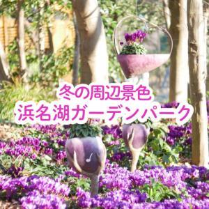 【浜松市】浜名湖ガーデンパークの冬の景色「シクラメンが綺麗!」年末年始・初日の出情報・12月&1月