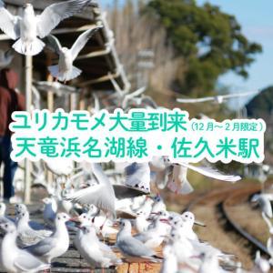 【浜松市・三ヶ日】天竜浜名湖線・佐久米駅のユリカモメ大量到来を体験!(12月~2月限定)