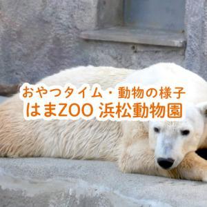 はまZOO浜松動物園の入園料が410円!?エサやりタイム巡り!白くま・レッサーパンダ・カピバラ動画あり