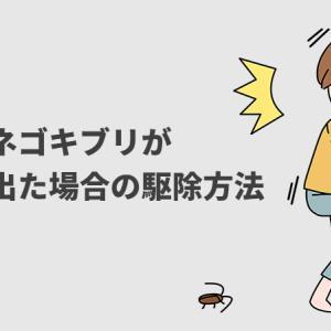 【元駆除のプロが教える】チャバネゴキブリ が自宅に出る原因と駆除方法