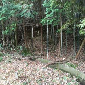 竹林伐採 〜 田んぼにお日様があたりますように 〜
