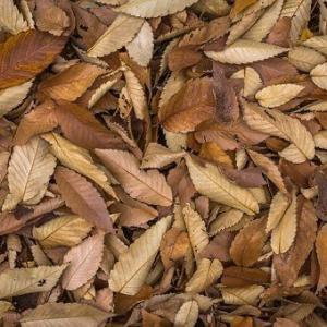 山林の活用:落ち葉をなんとかしよう。