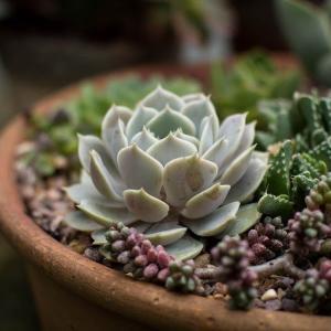 【植物図鑑】秋は多肉植物の成長の季節!育て方や管理方法を紹介