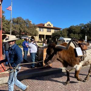 テキサス旅行記2 (お勧め観光地とBBQのお店)