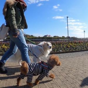 愛犬との散歩をもっと楽しく🐕散歩の質を高める5つのポイント🐶