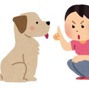【犬の無駄吠え】愛犬が吠えた時はどうしたらいいのか?