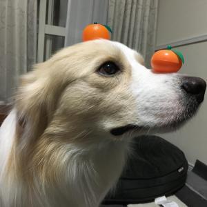 【犬にみかんは大丈夫❓】愛犬がみかんを食べる時に気をつける事