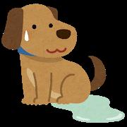 犬のトイレをしつける最も簡単な5つの方法【初めて犬を飼う方必見】