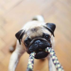 犬の甘噛みを治す簡単な3つの方法【甘噛みをする犬の心理と解決方法】