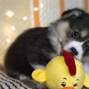 【タイプ別おすすめ】犬のおもちゃ選びのポイント10選