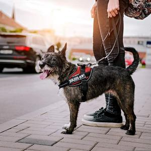 犬の首輪&リードの選び方を徹底解説!あなたの愛犬にオススメはコレ!