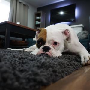 【賃貸でもペットと暮らしたい!】初めてペットを飼う人が押さえておきたい賃貸選びのポイントを解説!