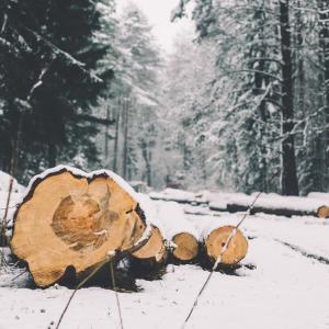 希少な材木が揃う、希少な材木屋さん