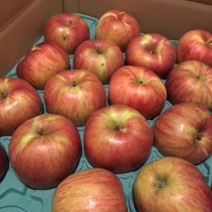 りんごがうまい