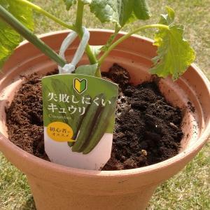 【食育】家庭菜園スタート♪