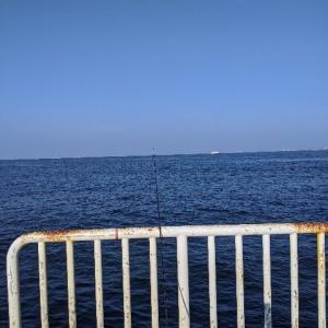 釣行:大阪 南港海釣り公園 良型アジ 好調