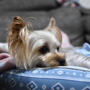 国内初 犬の新型コロナ陽性