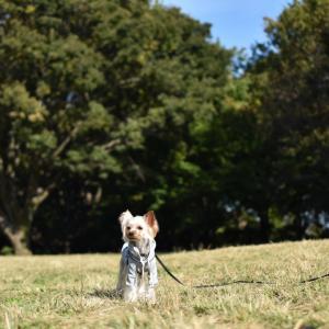 砧公園  紅葉散歩
