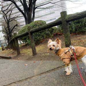雨降り散歩のこだわり