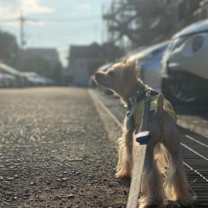 真夏の日曜日散歩