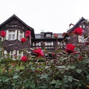 旧古河庭園の秋バラが見頃になった