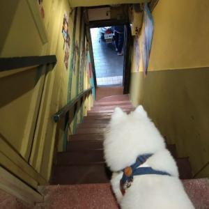 台北咖啡館  「樓梯好陡steepstairs」