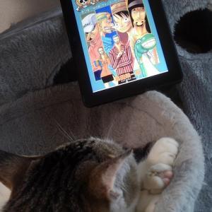 #219 ONE PIECEと久々に漫画を読む生活【日記】