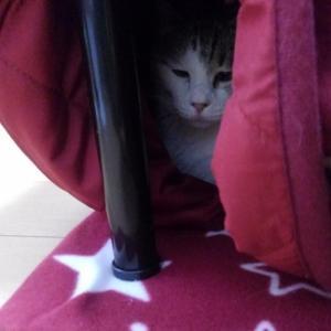 #299 夫の粉瘤手術と猫用コタツの時期【日記】