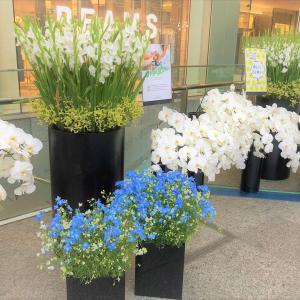 今週のお花🌼🌼🌼🌼