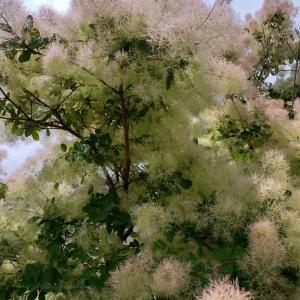 モフモフの樹撮ってみた!