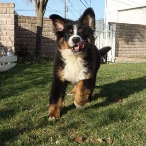 犬の肺炎 症状と治療
