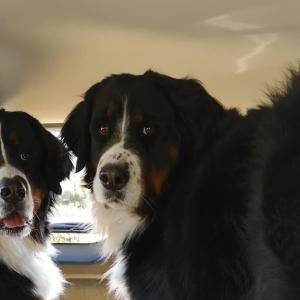 アウトバックで大型犬2頭はどうなのよ??