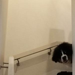 階段から・・・