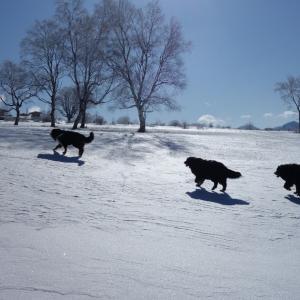 バーニーズと雪遊び in 菅平高原